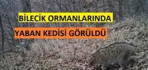 BİLECİK'TE YABAN KEDİSİ FOTOKAPANA ADETA POZ VERDİ