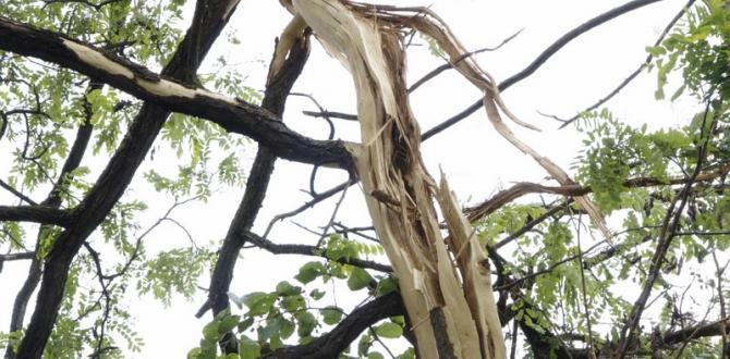 Pazaryeri'nde Ağaca Düşen Yıldırım Korkuttu