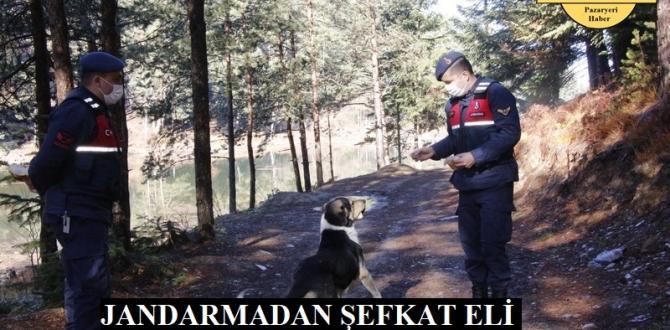 Pazaryeri Jandarmasından kırsaldaki aç hayvanlara şefkat eli