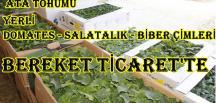 YERLİ DOMATES-BİBER, SALATALIK ÇİMLERİ BEREKET TİCARETTE
